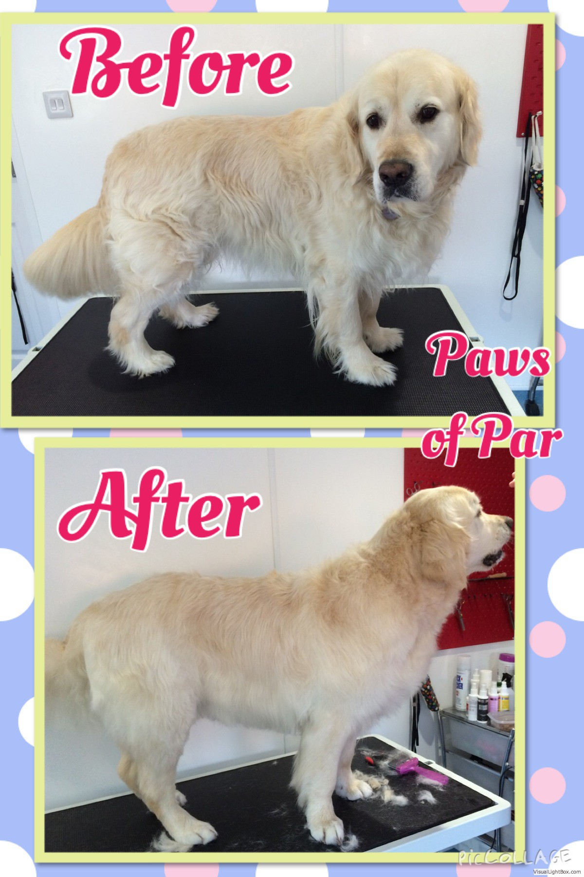 Paws Of Par Professional Dog Grooming